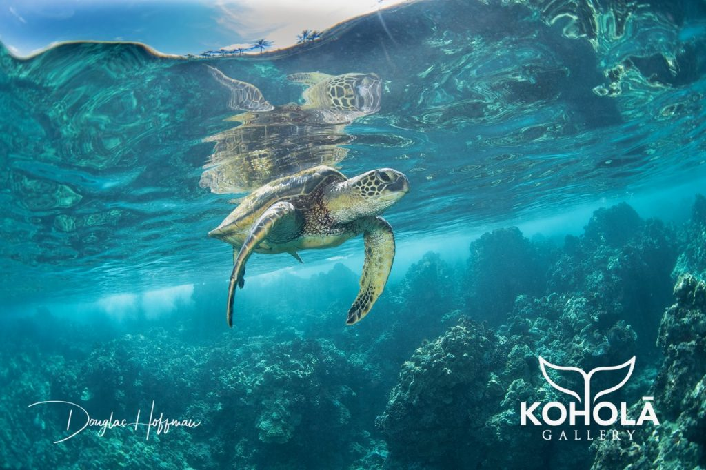 Maui Now: Koholā Gallery Opens at Wailea Village